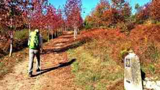 Easy Camino Portugues 12