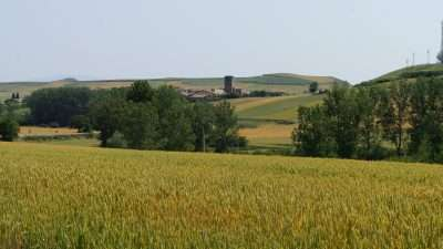 Camino Frances Stage 2: Logroño to Burgos 19