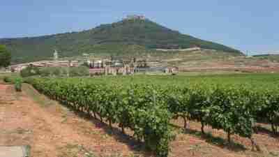 Camino Frances Stage 2: Logroño to Burgos 5