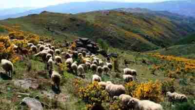 Porto and Peneda-Gerês National Park 1