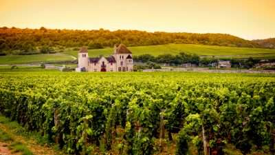 Wine Trails of Burgundy