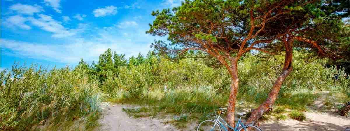 Cycling Along the Lithuanian Seaside 92