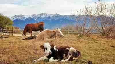 Transylvania and the Carpathian mountains 38