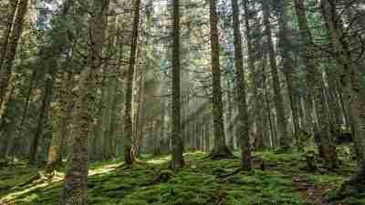 Transylvania and the Carpathian mountains 55