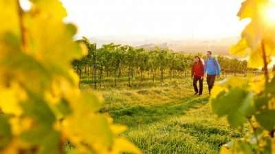 Palatine Wine Trail: Bockenheim to Burrweiler  The Natural Adventure Company 34