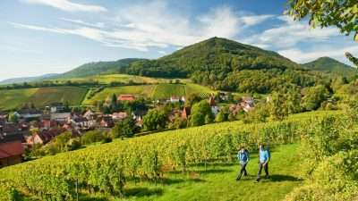 Palatine Wine Trail: Bockenheim to Burrweiler  The Natural Adventure Company 23